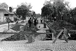 Banatska ulica