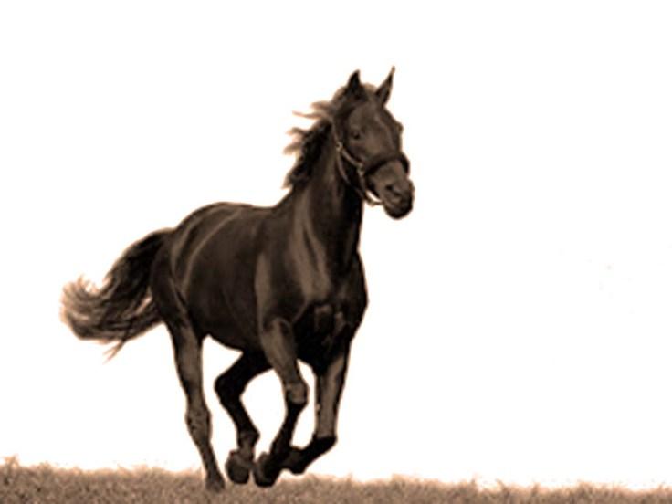 Vranac konj